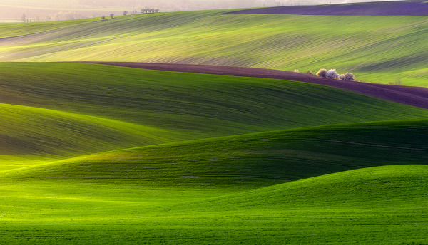 Verdant Land by Piotr Krol